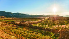 Sunset over the fertile valley in Dalmatia Stock Photo