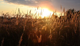 Sunset over field at autumn Royalty Free Stock Photo