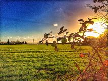 Sunset over a field Stock Photography