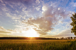 Sunset over the field. Sunset over the grass field Royalty Free Stock Image