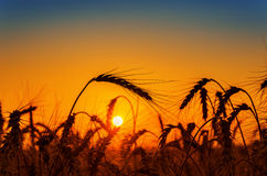 Sunset over field with harvest Stock Photos
