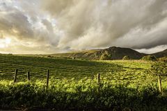 Sunset over field in Lake District,Cumbria,Uk. Green field lit by setting sun with mountain in background and colourful clouds on moody sky.Idyllic landscape of stock photos