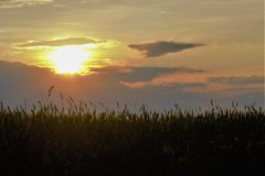 sunset over the field Royalty Free Stock Photography