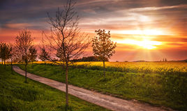 Sunset over the Field. Spring sunset over a coleseed field stock images