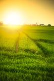 Sunset over field Stock Photo