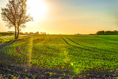Sunset over field Stock Image