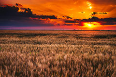 Sunset over field Royalty Free Stock Photography