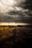 Sunset over field. Sunset over wheat field. leaden sky and grey clouds. Autumn landscape Royalty Free Stock Images