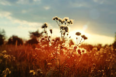 Sunset over field of wild land Stock Images