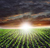 Sunset over fields. Freshly planted field in sunset Royalty Free Stock Images