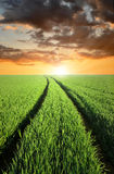 Sunset Over Fields Stock Photography