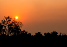 Sunset over the fields of grain with trees Royalty Free Stock Image