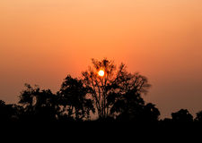 Sunset over the fields of grain with trees Royalty Free Stock Photo