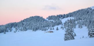 Sunset over fir trees by winter, Jura mountain, Switzerland Royalty Free Stock Images