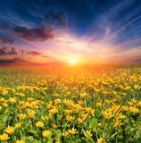 Sunset over flower meadow stock photo