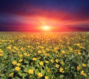 Sunset over flower meadow stock images