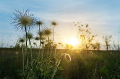Sunset over flowers Stock Photography