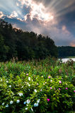 Sunset over flowers along the shore of Lake Williams, near York Royalty Free Stock Photo