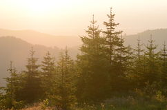 Free Sunset Over Forest Stock Photography - 67970222