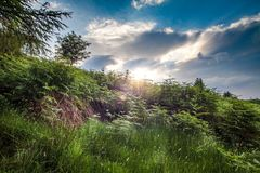 Sunset over forest. A sunset over a forest with blue skies above Royalty Free Stock Photo