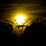 Sunset over Forest Clearing. Sunset splicing barren tree in a clearing in the tropical rain forest suggesting the metaphor 'full-circle Stock Photo