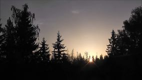 Sunset over the forest stock footage