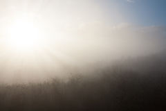Sunset over a forest in mysterious fog Stock Photo