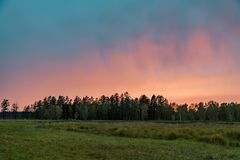 Sunset over the forest. Portrait of Sunset over the forest royalty free stock image