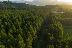 Sunset over forest, Rotorua, New Zealand. Aerial view of sunset over redwood forest in rural Rotorua, New Zealand royalty free stock photos