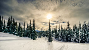 Sunset over the forest on the ski hills at Sun Peaks village Royalty Free Stock Photos