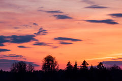 Sunset over forest trees Stock Images