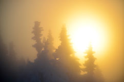 Sunset over the forest in winter Royalty Free Stock Image