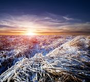 Sunset over winter meadow royalty free stock images