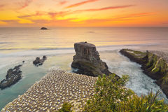 Sunset over Gannet Colony, Muriwai Beach, Auckland, New Zealand Royalty Free Stock Photography