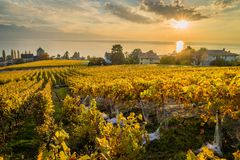 Sunset over Geneva lake in Lutry. Sunset over geneva lake and vineyards in Lutry, close to Lausanne, with yellow autumn colors Stock Image