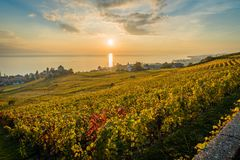 Sunset over Geneva lake. And vineyards in Lutry, close to Lausanne, with yellow autumn colors Stock Photography