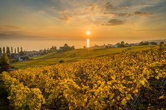 Sunset over yellow vineyards in Lutry. Sunset over geneva lake and vineyards in Lutry, close to Lausanne, with yellow autumn colors Royalty Free Stock Photography