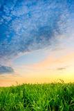 Sunset over grass Royalty Free Stock Photo