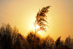 Sunset over grass Royalty Free Stock Images