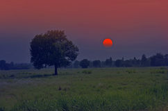 Sunset over grass field with big tree. In the countryside of winter Royalty Free Stock Photos