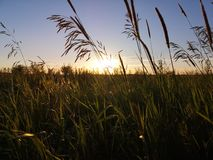 Sunset over grass field in Lithuania stock image