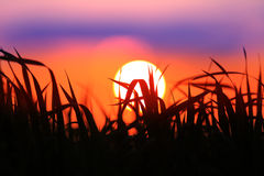 Sunset over grass on meadow Stock Photography