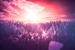 Sunset over grasses Stock Photo