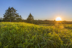Sunset over Grassy Green Field Royalty Free Stock Images