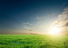 Sunset over green crops Stock Photography