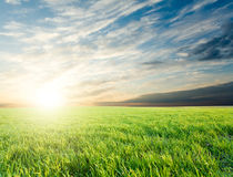 Sunset over green crops. Bright sunset over growing green crops in the field Stock Photo