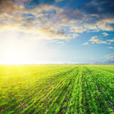 Sunset over green field Royalty Free Stock Photography
