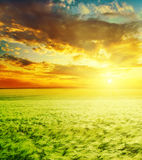 Sunset over green field Royalty Free Stock Image