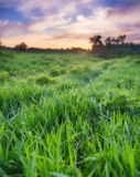 Sunset over green field. Beautiful sunset over green field. Photo with small depth of field, and focus on a nearest grass Stock Photography