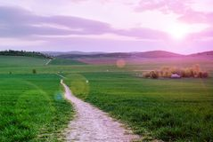 Sunset over the green field Stock Photography